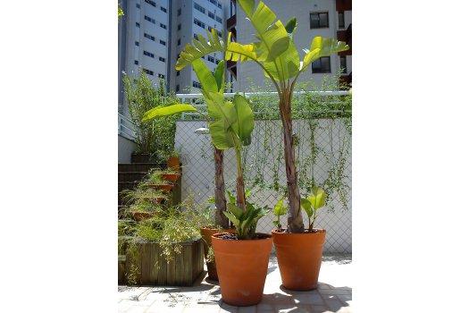 Paisagismo Terraço Centro  - Florianópolis
