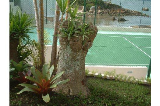 Paisagismo Residência Coqueiros  - Florianópolis
